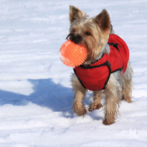 Winter Activities to Do with Your Pet This Season